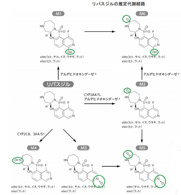 グラナテック(一般名:リパスジル塩酸塩水和物)の代謝経路