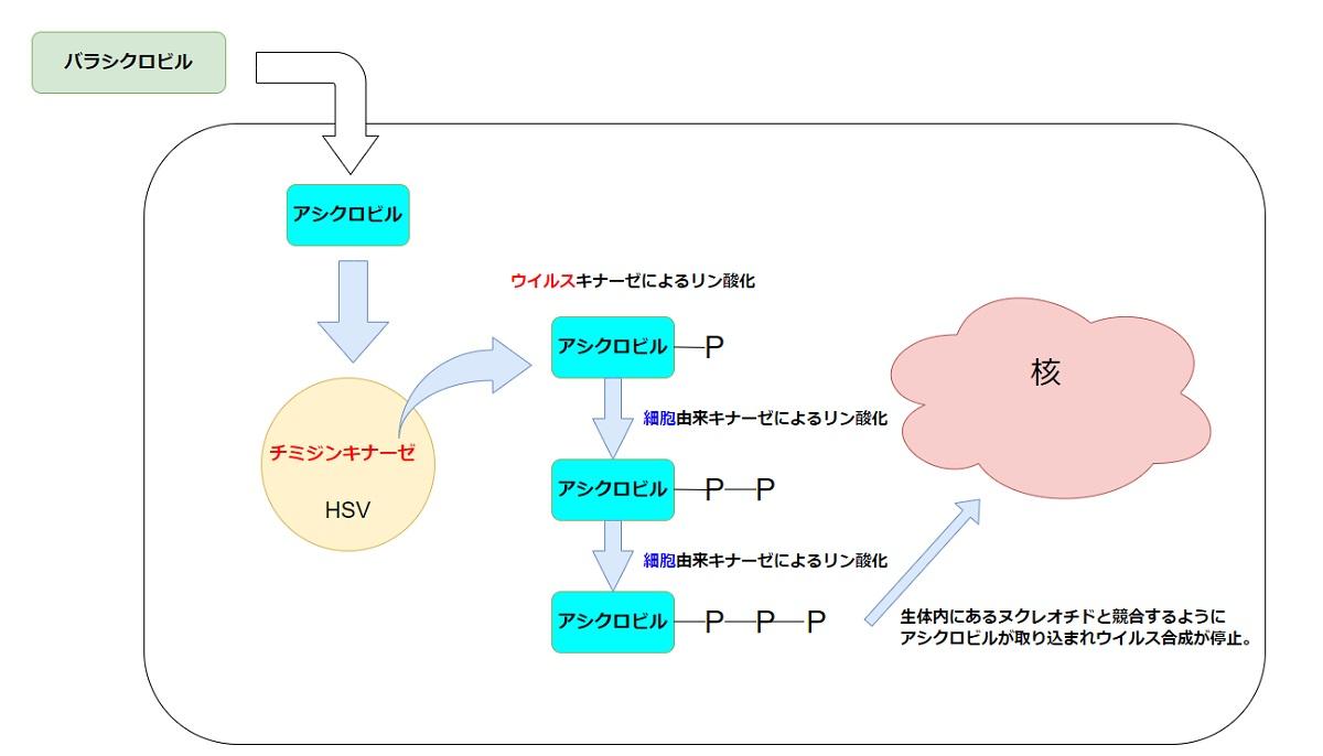 バラシクロビルの作用機序